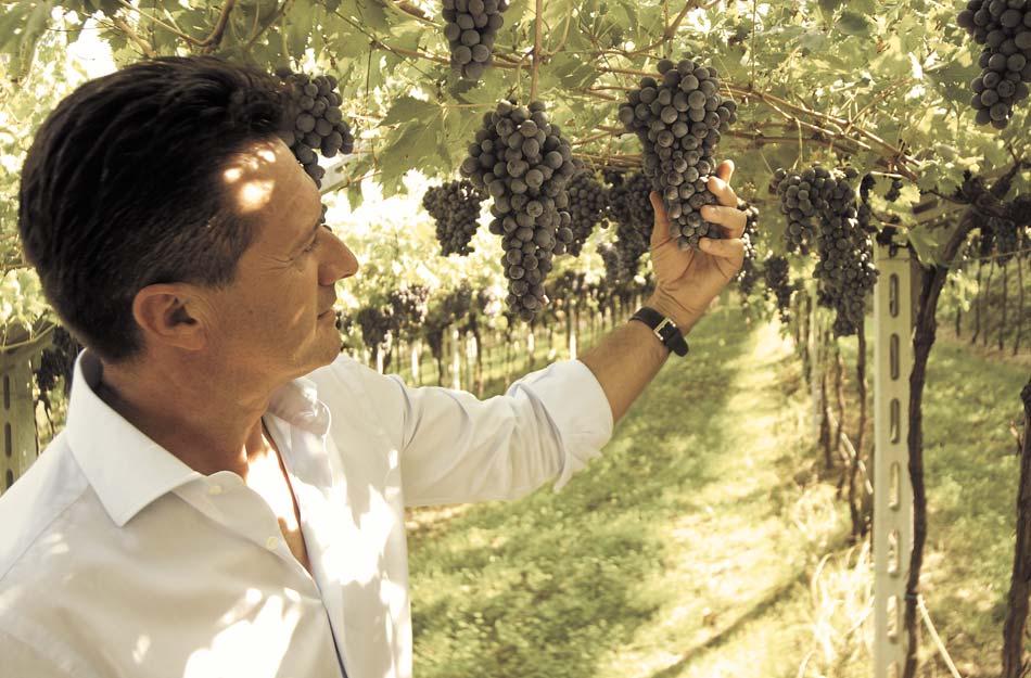 Fausto Bulgarini con grappolo